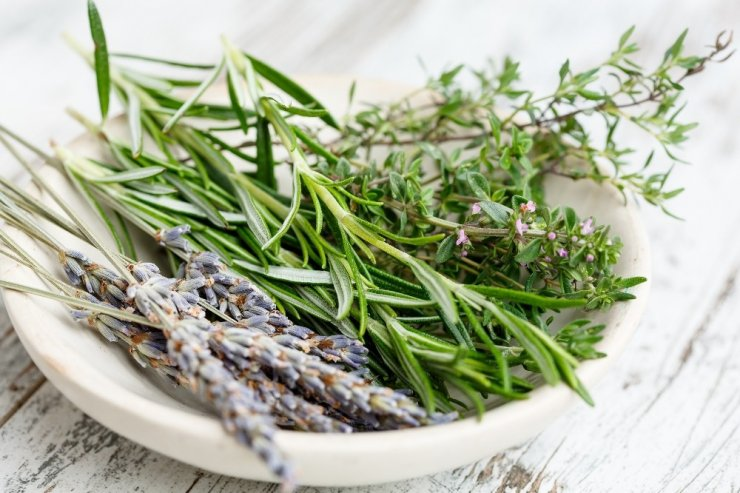 Türkiye aromatik bitki zengini