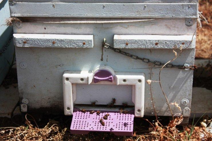 Arıcılar güneş enerjili baraka ile üretimlerini arttırıyor