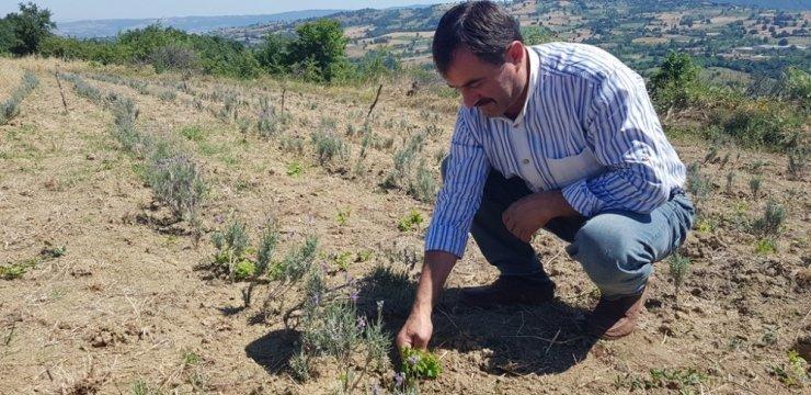 İnegöl Beleddiyesi'nden tıbbi aromatik bitki yetiştiriciliğine destek