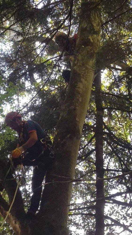 Yamaç paraşütü yaparken ağaca takılıp mahsur kaldı