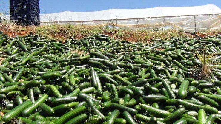 Satılamayan salatalıkları araziye döküyorlar