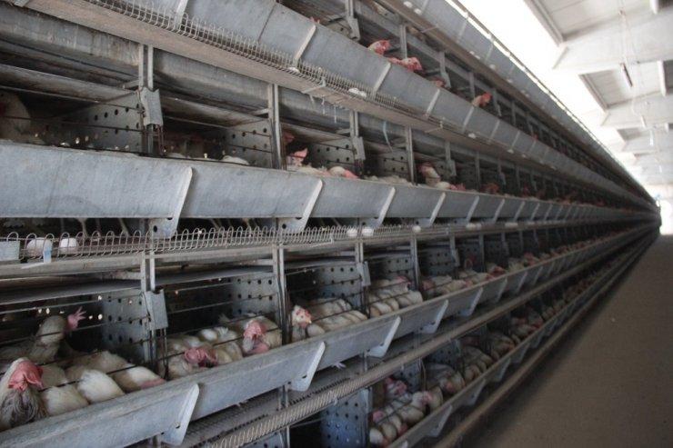 Yumurta üreticileri çözüm bekliyor