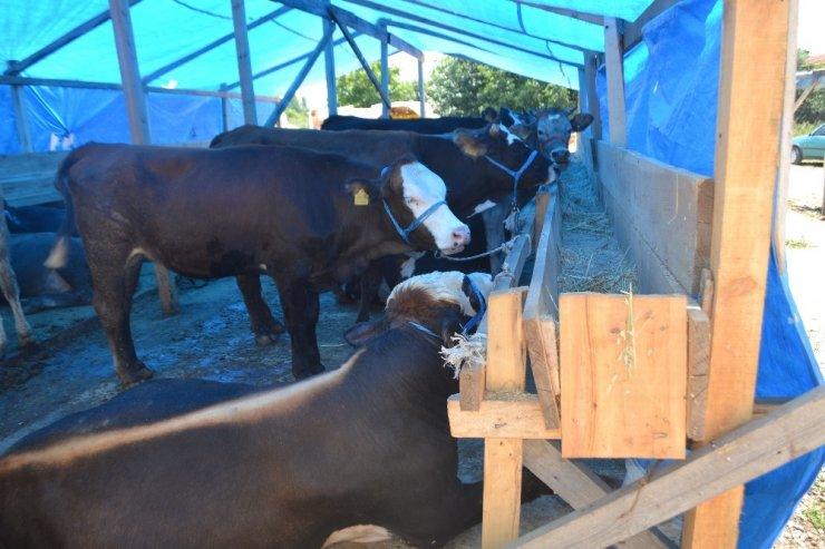 Kurban Pazarı'nda hayvanlar erken tükendi