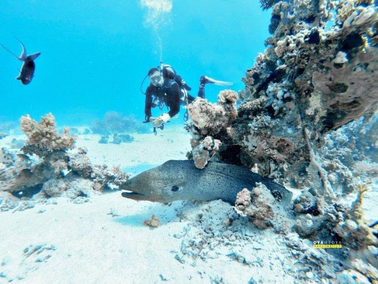 Mersinli dalgıçlar, Kızıldeniz'in büyülü dünyasına daldı