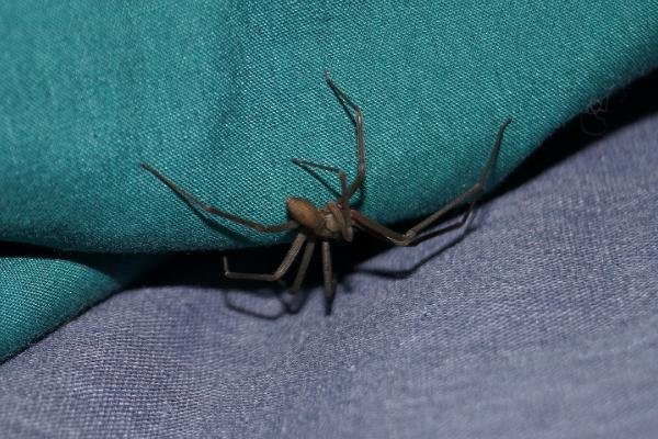 Doktora gidince şok oldu! Kulağında örümcek çıktı