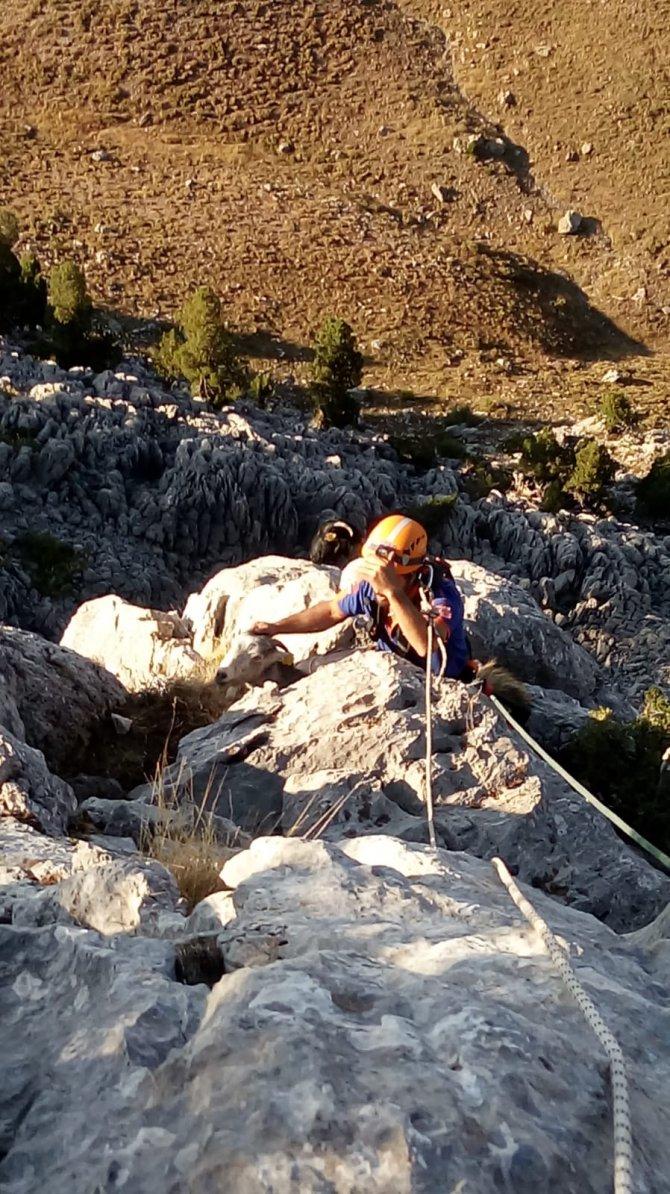 afad-ekipleri-kayaliklarda-mahsur-kalan-4-keciyi-kurtardu-5.jpg