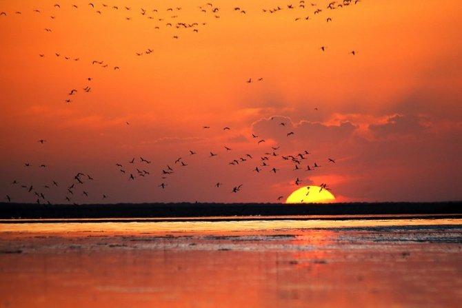 flamingolar-(1).jpg