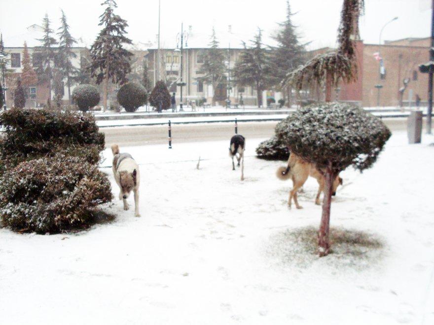 hayvanlar--(2).jpg