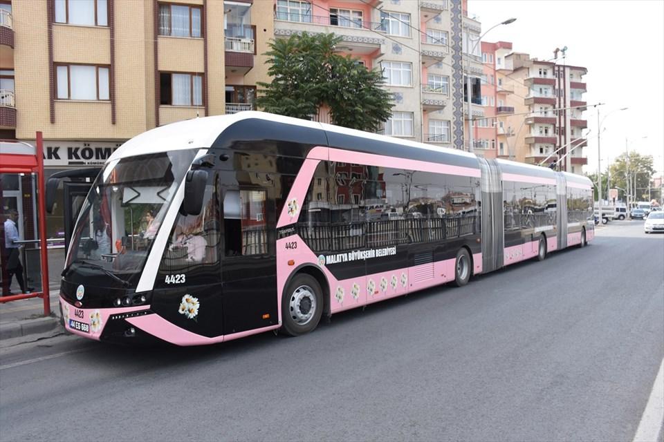 pembe-trambus.jpg